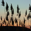 "Sunset behind the grasses.   ""If you wait to do untill you're sure it's right , you'll probably never do much of anything"" ~Win Borden ~"