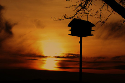 Mar 26/09 I was not intending to repeat another sunset pic so soon :)  but as I was driving by the lake,I saw this bird house with a bright sunset at it's back drop. Just loved it !